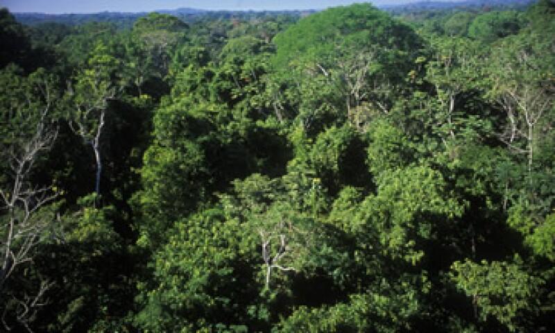 La selva amazónica ha disminuido desde la década de 1950 debido a que se han cortado y quemado áreas para la agricultura (Foto: Getty Images/Archivo )