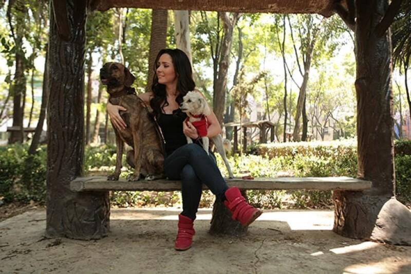 Tacha y Tito son perros muy amorosos.