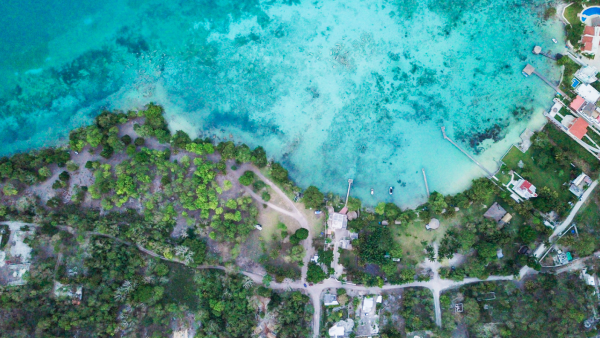 Selva - tren maya