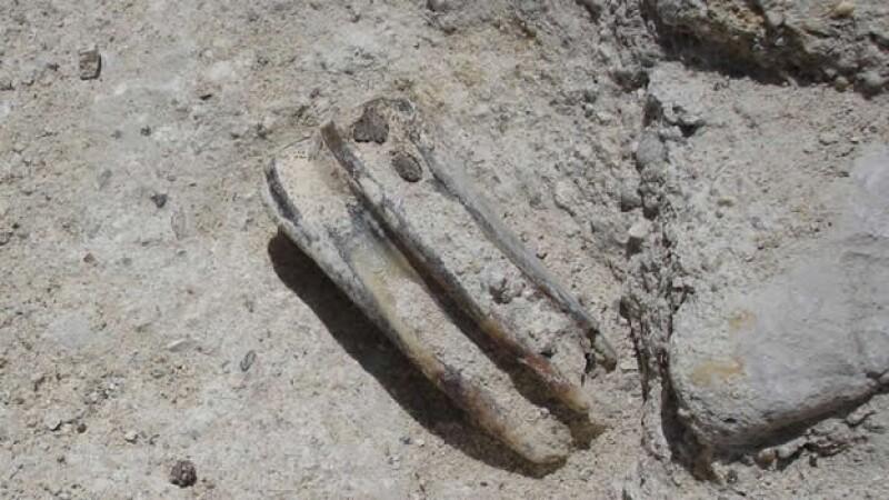 Los restos fósiles que fueron encontrados en Chilpancingo, Guerrero, durante la construcción de una vivienda