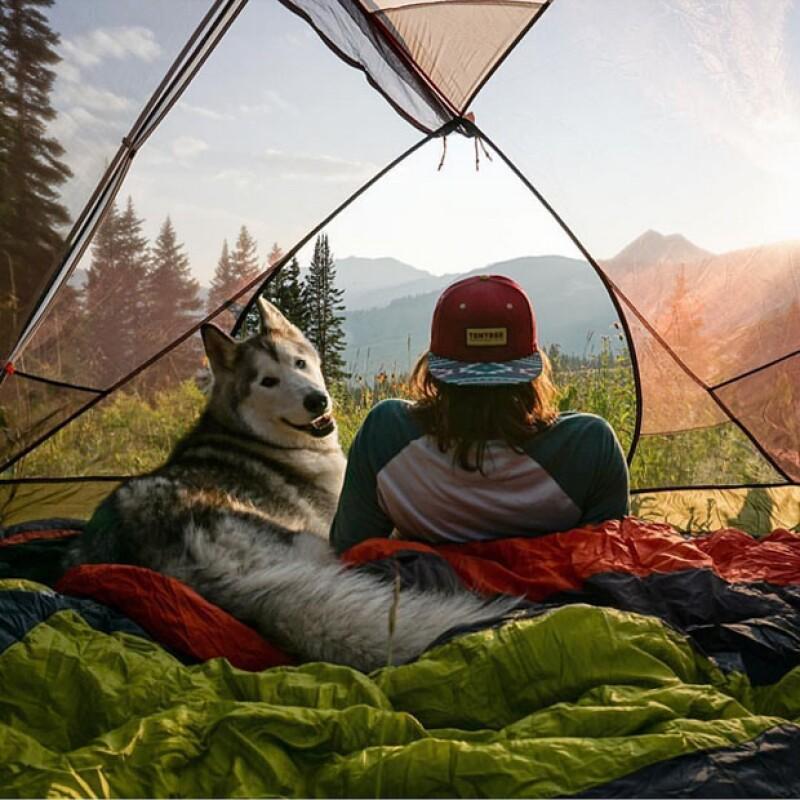 Este perro disfruta de tiempo de calidad junto a su dueño.