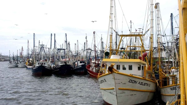 Pesca y acuacultura