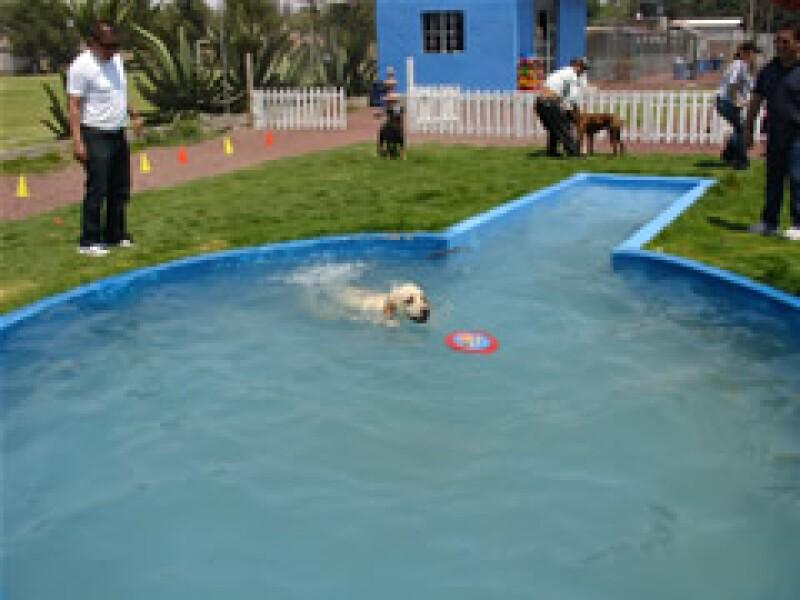 En Villas Caninas los perros tienen espacio para nadar y convivir con otras mascotas. (Foto: Cynthia Moreno)