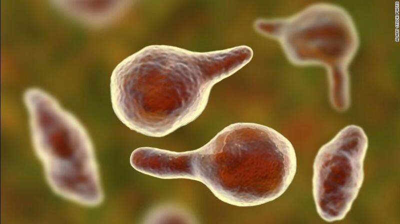bacteria 2.jpg