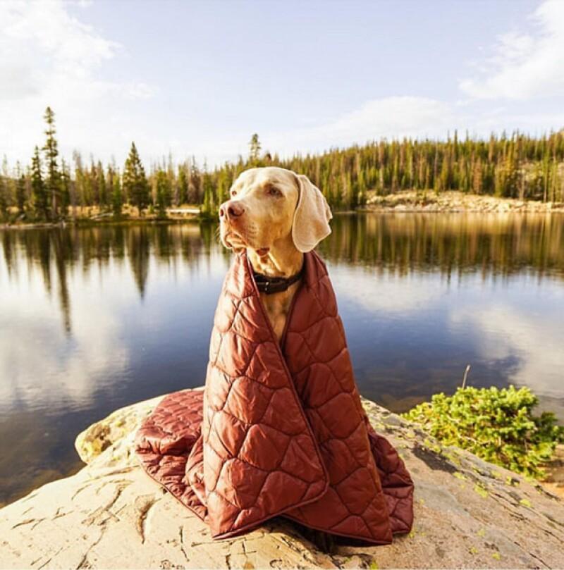 Este perrito muy abrigado para una mañana fría en el bosque.