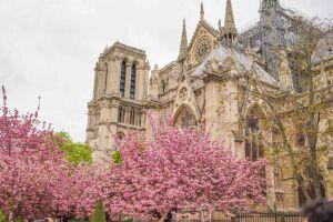 Spring Illustration In Paris