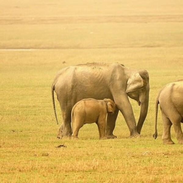 irpt-elefantes-india3
