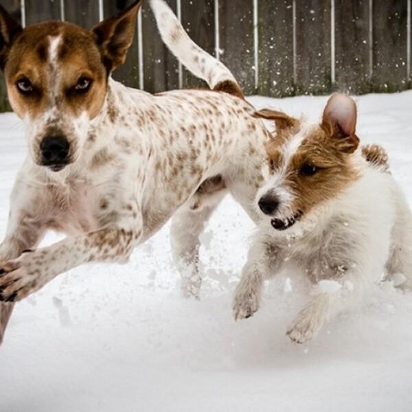 ireport mascotas nieve EU 02