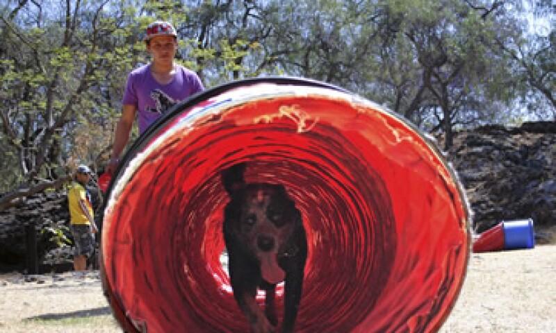 Jean Loui asegura que cualquier perro puede ser entrenado.  (Foto: Cortesía Pek)