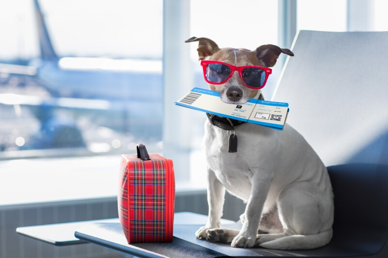 Resultado de imagen para viajar con mascota en el avión