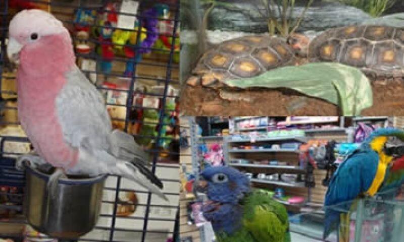 Maskota ya había retirado algunas especies de las tiendas previamente por restricciones de las autoridades. (Foto: Tomada de profepa.gob.mx )