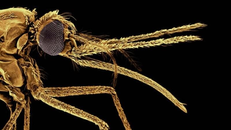 Entre incertidumbres y éxitos: la lucha contra la malaria en los últimos cien años