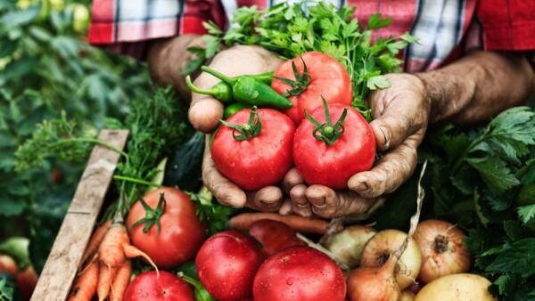 alimentos - agricultura - campo mexicano