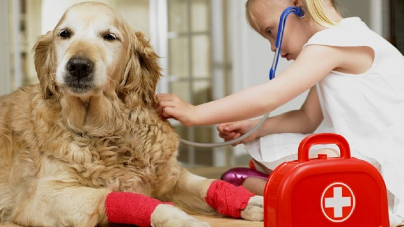 veterinario vet perro nina