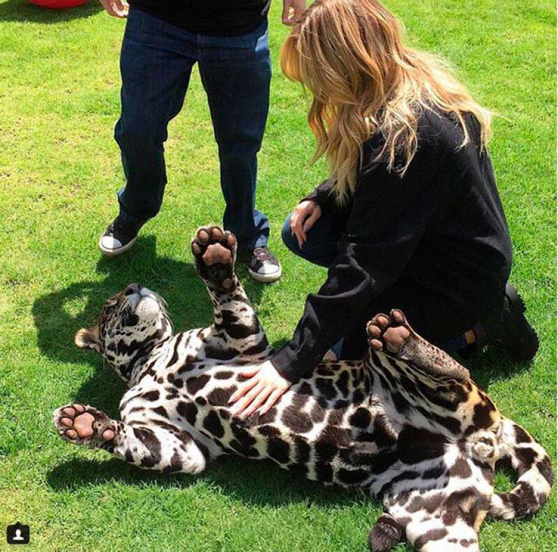 De acuerdo con un informante, las estrellas de reality no cobraron por ser parte de esta campaña en pro de los felinos.