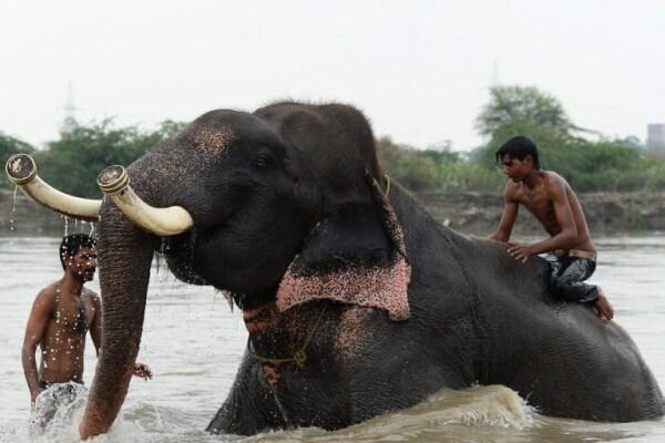 Vida de elefantes
