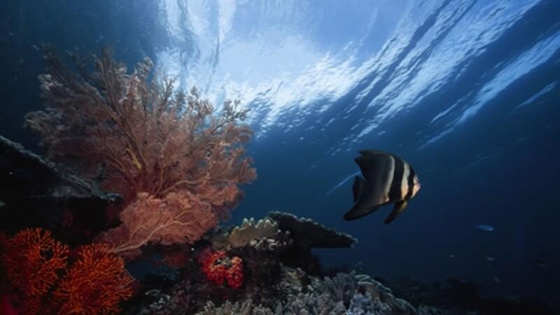 oceano especies conservacion