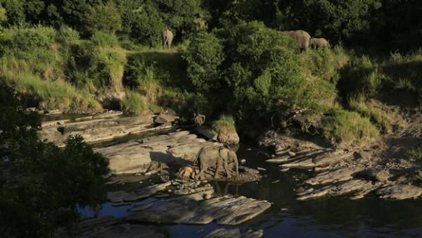 elefante medio ambiente