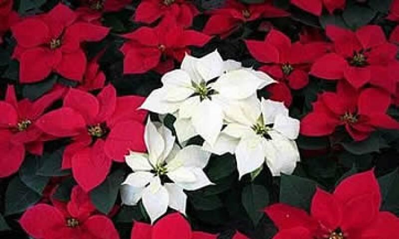 Nochebuena (Foto: Enchulatuflog)