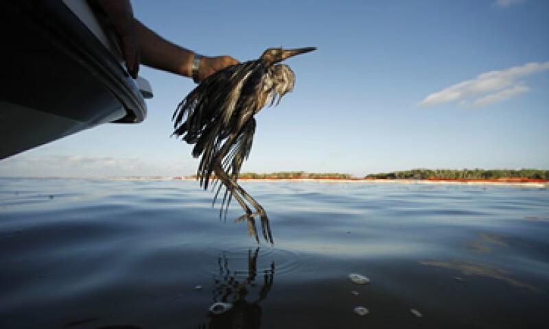 El pozo petrolero de BP explotó en el Golfo de México provocando el derrame de 50 millones de litros. (Foto: AP)