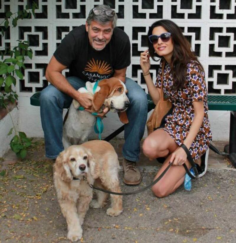 La popular pareja ha adoptado a esta encantadora basset hound, de nombre Millie, en un refugio de California.
