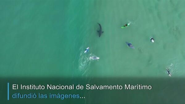 Un tiburón blanco es captado mientras acecha a surfistas