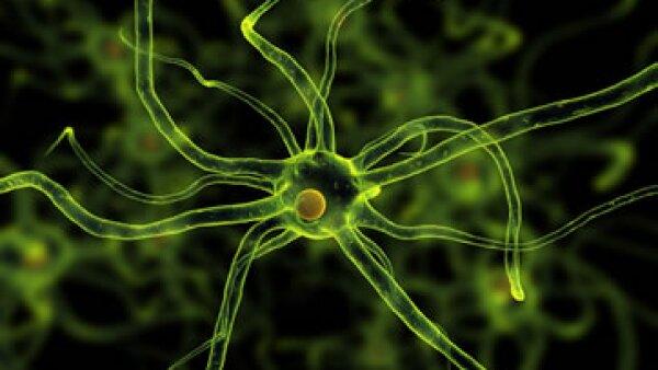 Los científicos aseguraron que el descubrimiento podría tener implicaciones para comprender cómo evolucionó el cerebro humano.  (Foto: Getty Images)