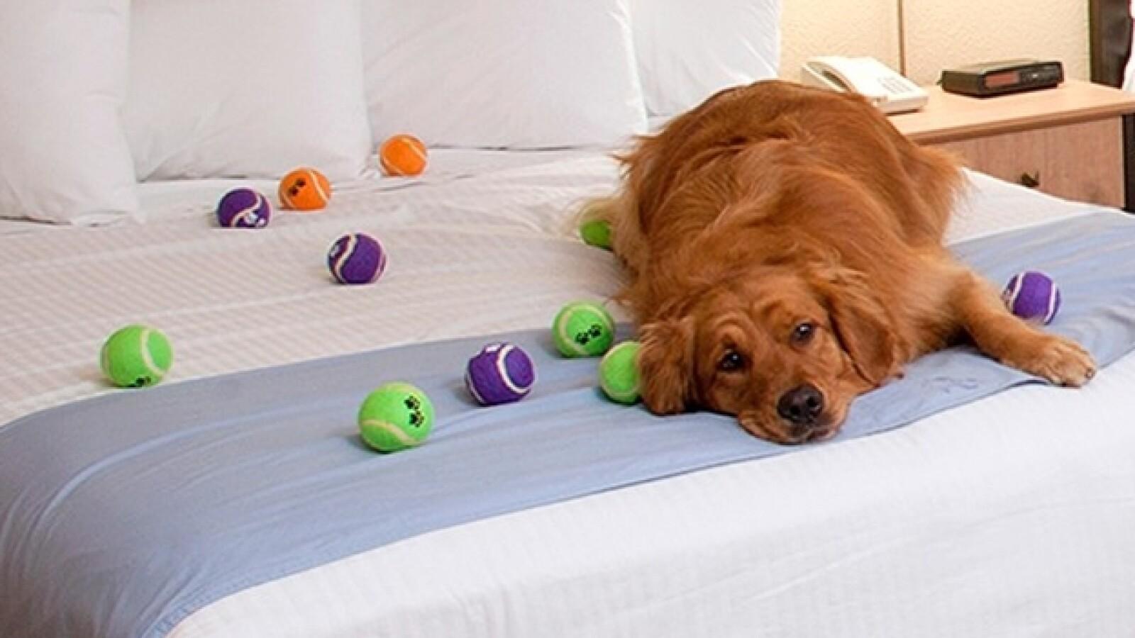 Best Western hotel perros