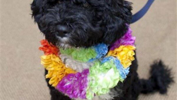 La familia Obama presentaron el día de ayer oficialmente a `Bo´, el perro de aguas portugués.