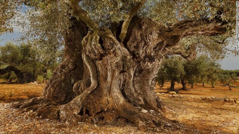 Árboles antiguos