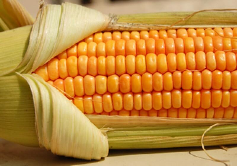 Grupo SACSA invierte en la investigación de semillas de maíz transgénico y calcula que en dos años comenzarán las siembras comerciales de este producto. (Foto: Cortesía SXC)