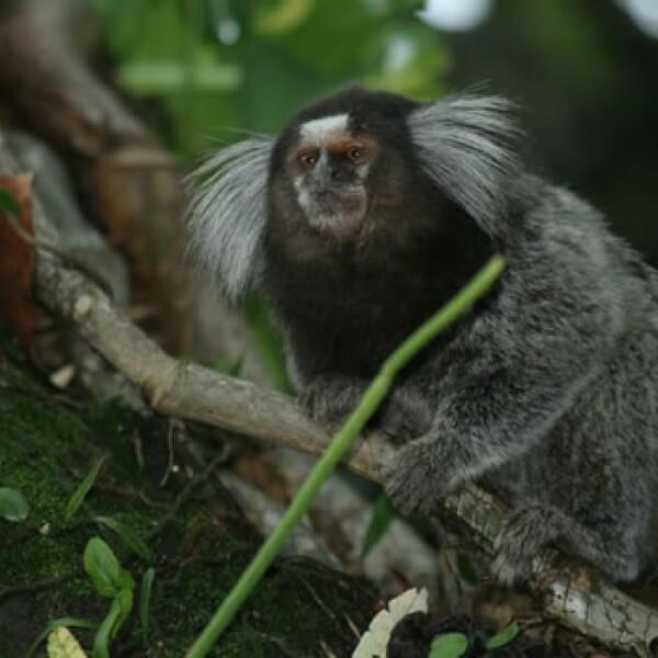 nuevas especies amazonas