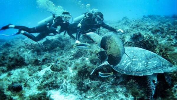 La pareja se maravilló con las especies marinas.