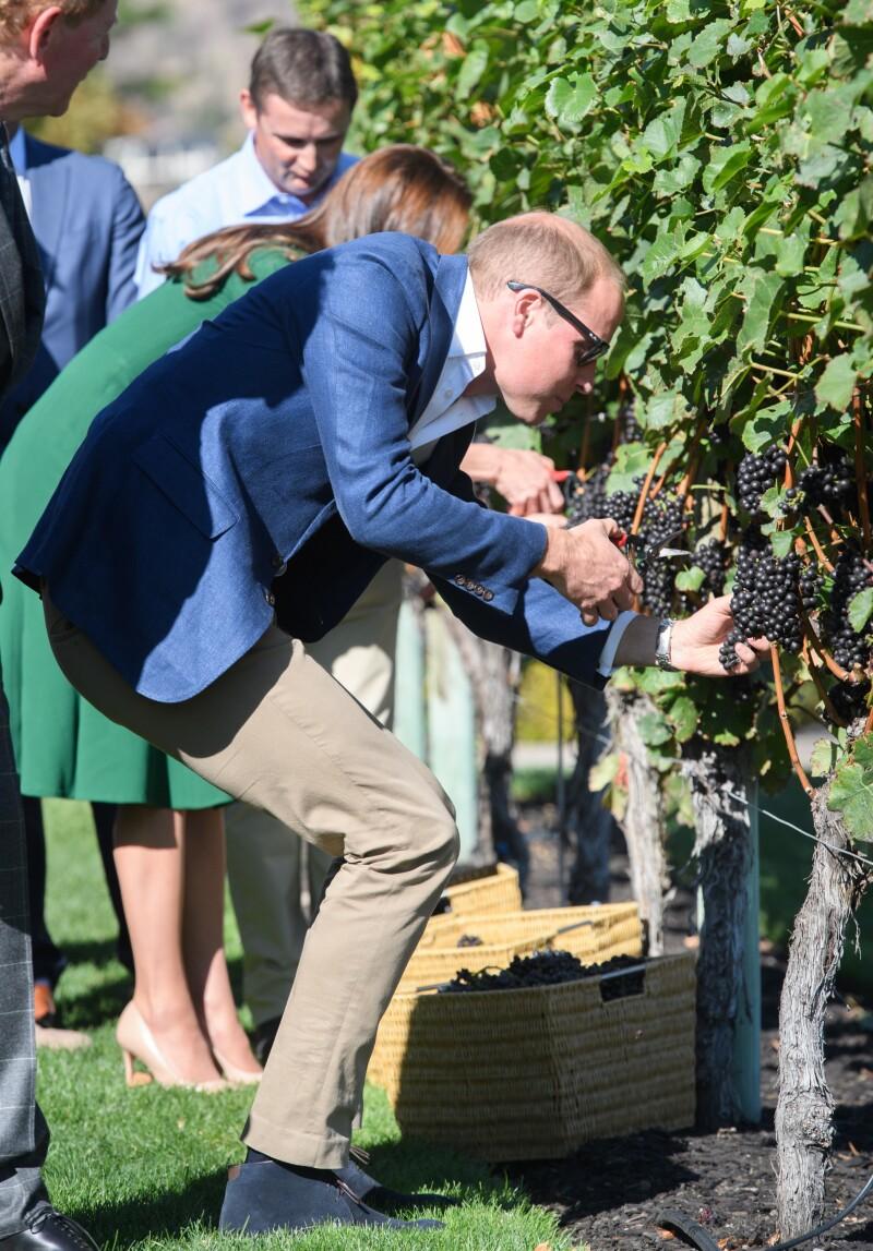 William y Kate en la zona vinícola