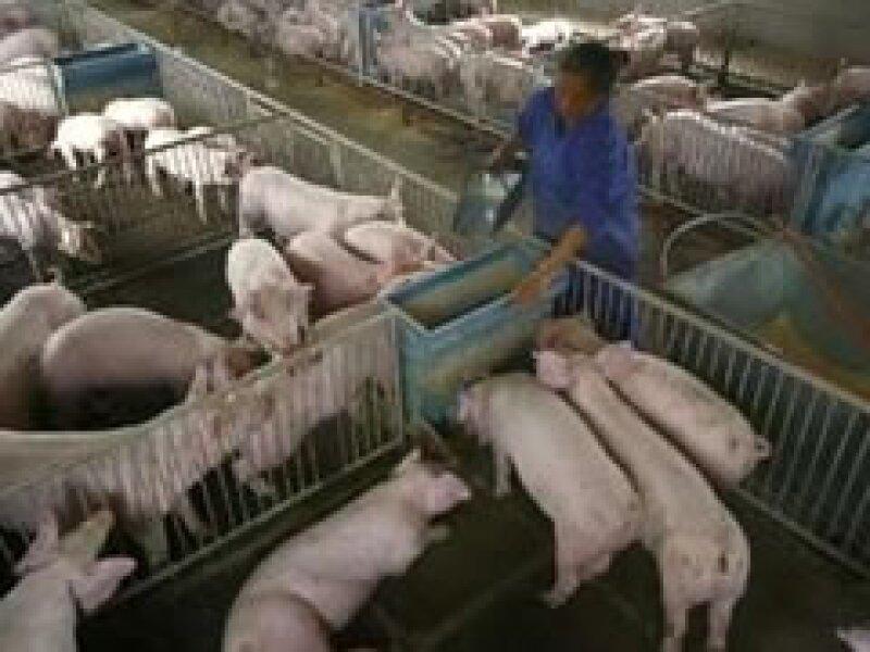 El judaísmo prohibe el consumo de productos de cerdo. (Foto: Reuters)