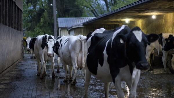 Productores lácteos