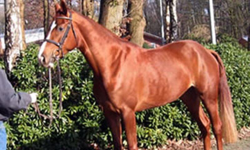 El dinero recaudado en la subasta de caballos se destinará al Servicio Interno de Rentas de EU.  (Foto: Thinkstock)
