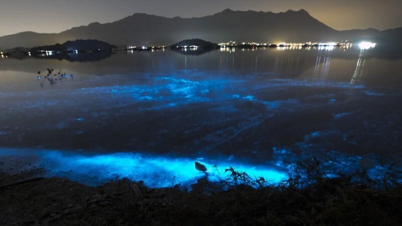 algas azules hong kong
