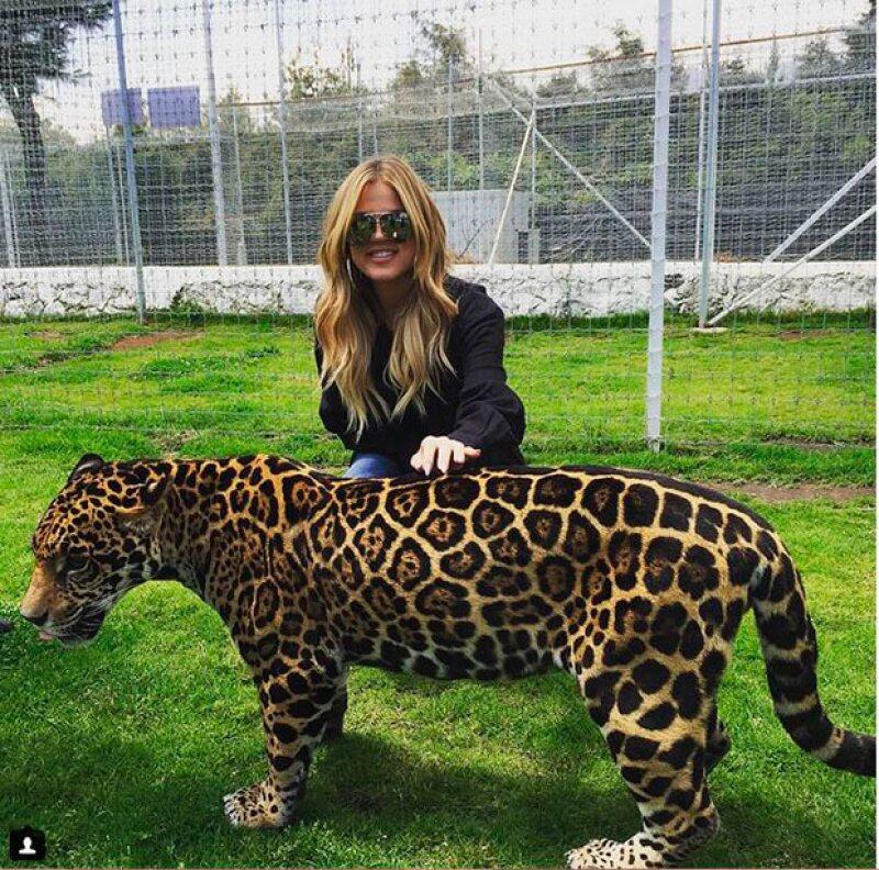Las estrellas de reality visitaron Black Jaguar White Tiger Foundation México donde tuvieron la oportunidad de convivir con felinos.