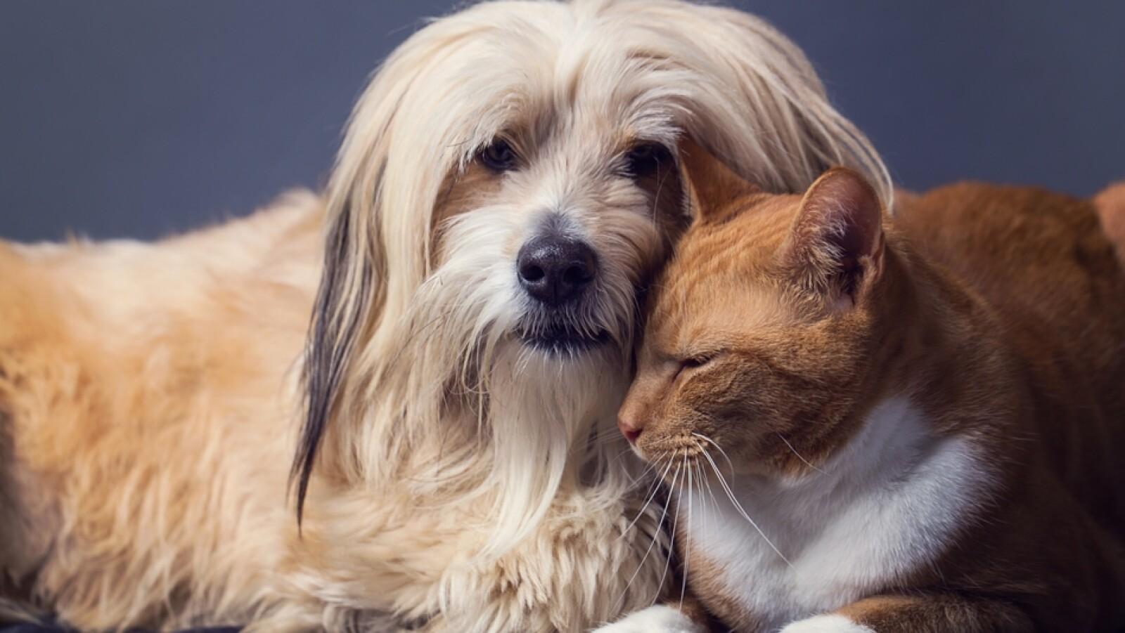 perros y gatos  mascotas
