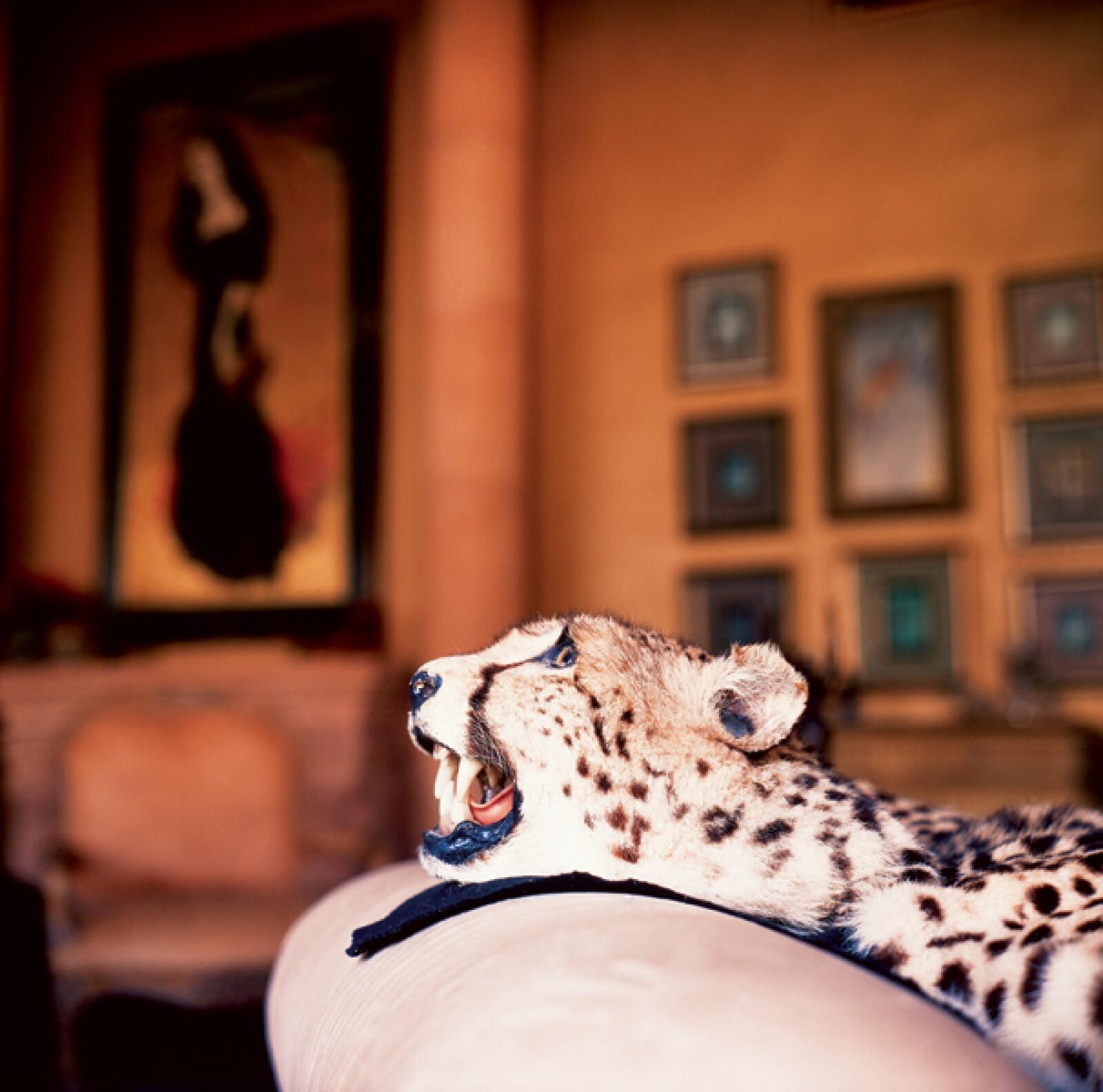 Jorge Hank Rhon dijo en el programa Shalalá que tiene más de 25 mil animales en su zoológico.