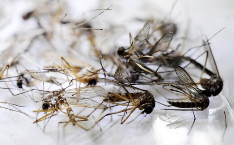 El virus es trasmitido por un mosquito proveniente de África y Asia, y ya ha llegado al continente Americano y te decimos lo que debes saber.