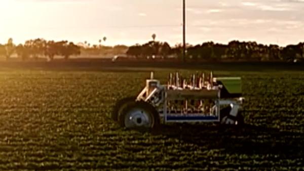 Este robot es capaz de cosechar fresas las 24 horas del día