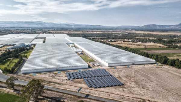 Parques solares en agroindustria.