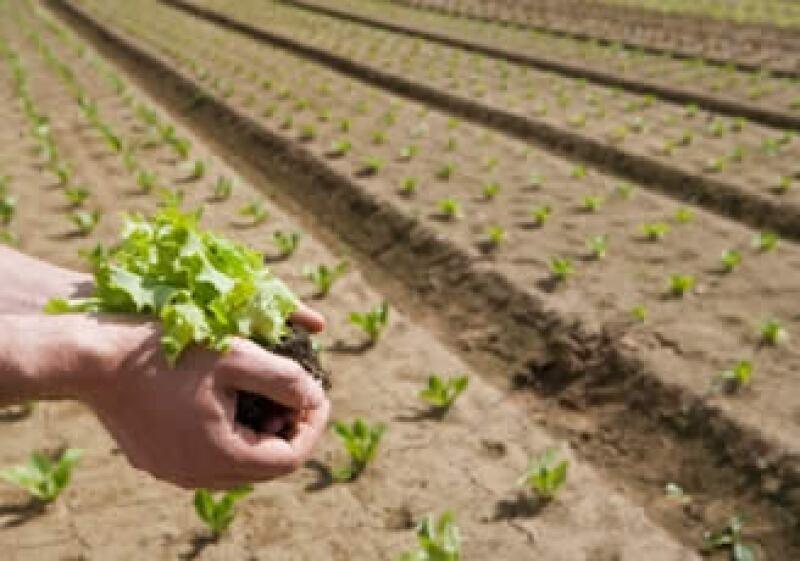 La FAO dijo que prevé que la producción agrícola crezca un 12% en los países industrializados en la próxima década. (Foto: Jupiter Images)