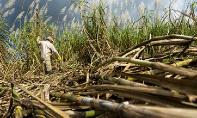 Ambos países buscan proporcionar una materia prima de bajo costo para una renovada industria de biocombustibles.  (Foto: Getty Images)