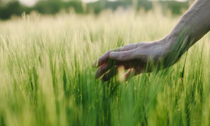 Se acordó explorar la creación de una reserva alimentaria para enfrentar emergencias por desastres naturales. (Foto: Getty Images)