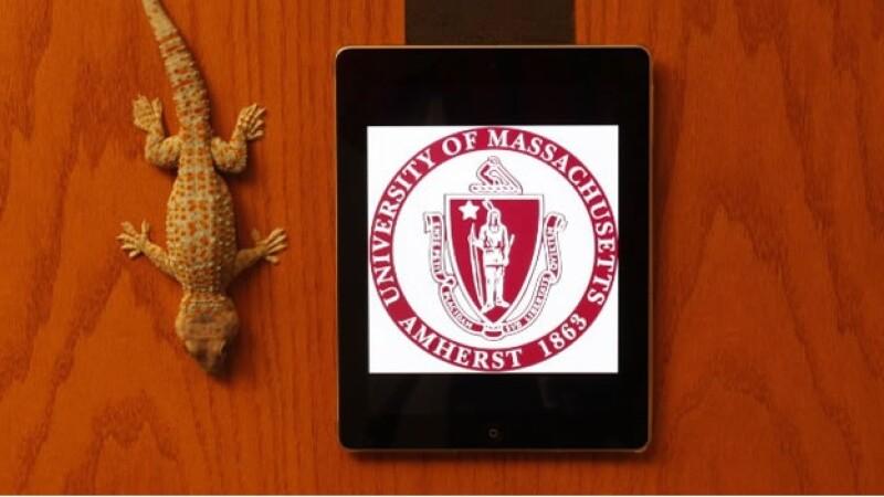 Los investigadores en UMASS Amherst han desarrollado Gecksking, inspirados en la habilidad de los gecos de caminar sobre ventanas de vidrio y colgarse de cabeza en las puertas de madera