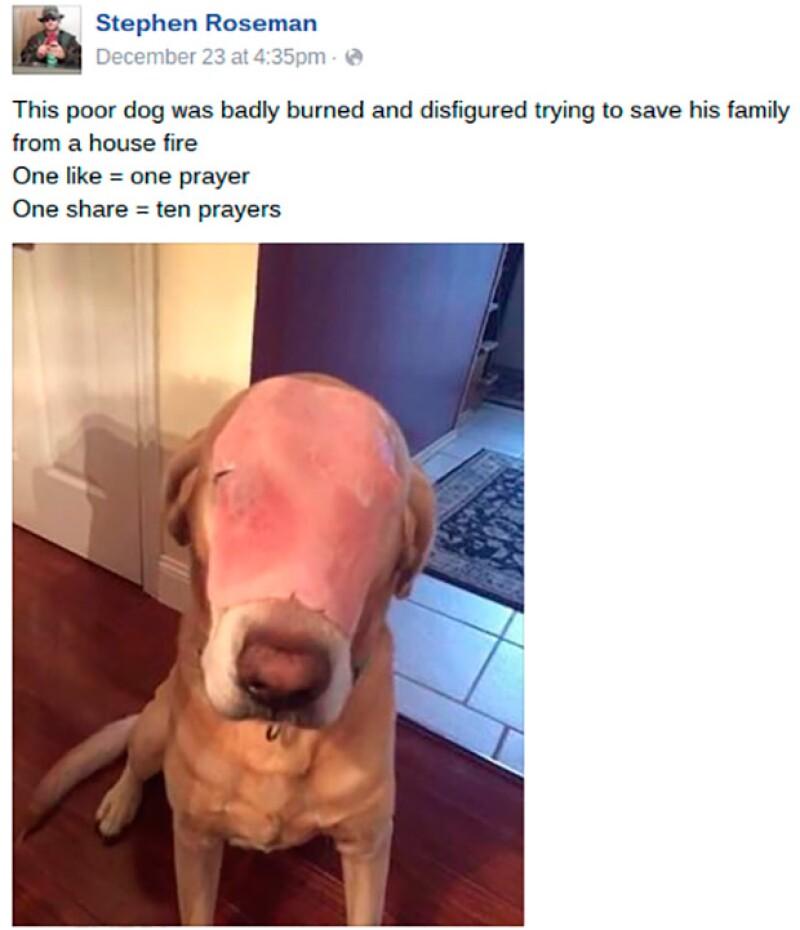 La imagen de este animal ha circulado por todo el mundo, pero ¿qué fue lo que realmente le pasó?