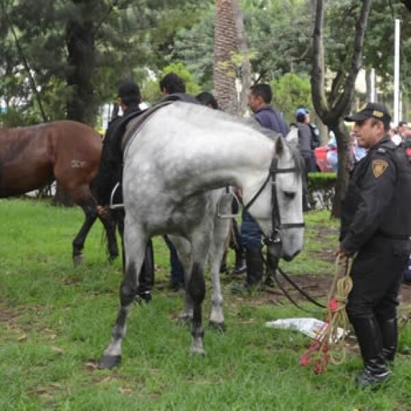 Escape de caballos